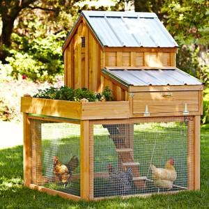 Williams-Sonoma chicken coop by Saltbox Designs